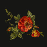Embroidery wild roses, dogrose flowers. Classic style embroidery, beautiful dogrose pattern vector. Vintage buds of wild roses on black background. Fashionable template tapestry flowers renaissance - 160562584