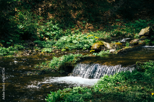 Cold fresh mountain stream surrounded by forest, sunlight