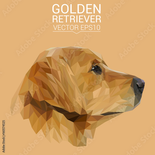 Golden Retriever Dog animal low poly design. Triangle vector illustration. © shekularaz
