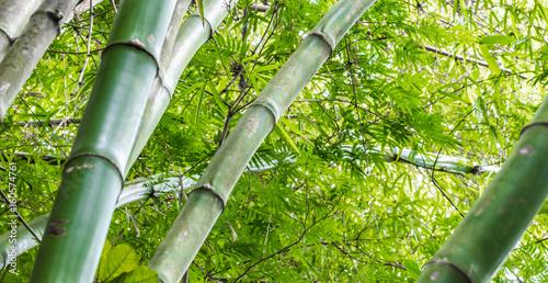 Papiers peints Bambou Fundo com bambu.