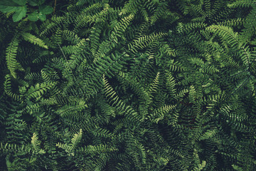 Dark Fern Leaves Texture