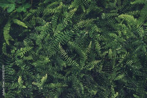 Dark Fern Leaves Texture