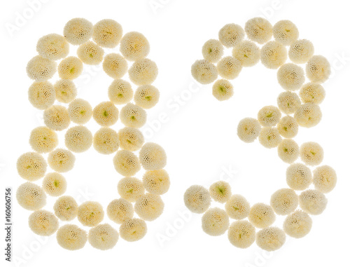 Poster Arabic numeral 83, eighty three, from cream flowers of chrysanthemum, isolated o