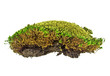Green moss on a white background, close up
