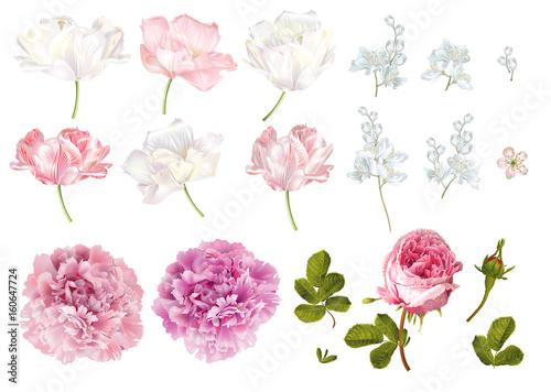 Fototapeta Flower elements set