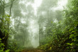 Foggy rainforest in the mist, Soft focus