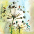 Watercolor Umbrella Type Flowers Herbs Floral Abstract Background Texture Illustration Hand Painted Artistic