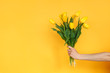 Crop hand with yellow tulips
