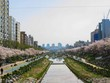 town scape with cherry blossoms in seoul korea