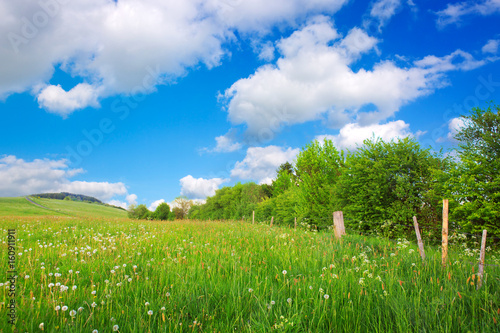 Green trees on the flowers field and clouds.