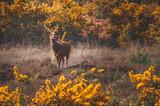 Deer buck in the wild