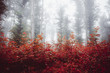 fantasy autumn forest with vivid foliage and trees in mist