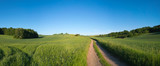 Green field and clear blue sky panorama