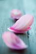 Quadro Peony petals