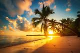 Palm and tropical beach in Punta Cana, Dominican Republic - 160987944