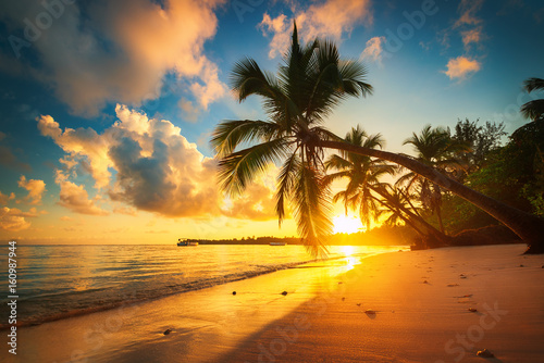 Papiers peints Tropical plage Palm and tropical beach in Punta Cana, Dominican Republic