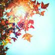 Quadro Beautiful autumn leaves and sky background in fall season, Colorful maple foliage tree in the autumn park, Autumn trees Leaves in vintage color tone.