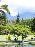 View of a flowering plumeria tree near an artificial pool in a tropical park over mountains covered with heavy clouds, Taman Ujung water palace park, Karangasem region of Bali island, Indonesia