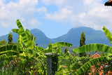 A tropical balinese background with green fresh broad leaves of palm trees and cloudy mountains on the background