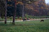 Russia. Stavropol region. Kislovodsk. Black horses walk in the Kislovodsk park.