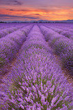 Sunrise over fields of lavender in the Provence, France - 161123914