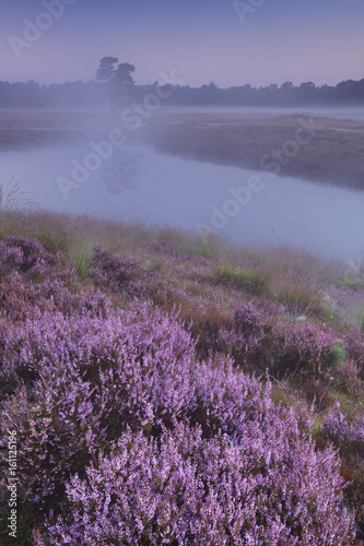 Fotobehang Purper Blooming heather along a lake at dawn