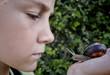 curiosity boy and snail