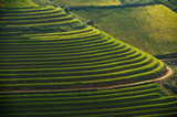 Terrace rice field of Mu Cang Chai on during sunrise, sunrise effact, Vietnam