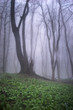 green forest vegetation in landscape with old tree and mist