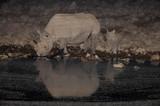 Spitzmaulnashorn mit Jungtier an einer Wasserstelle in der Nacht, Etosha Nationalpark, Namibia