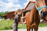 Girl is cleaning a horse