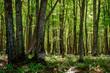 Forest in Michigan
