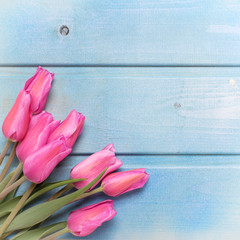 Bunch of pink tulips flowers on blue wooden background.