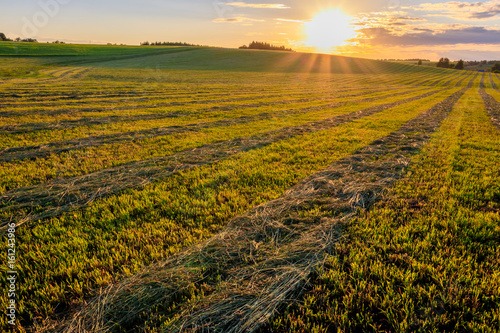 Sunset at cultivated land in the countryside on a summer. Poster