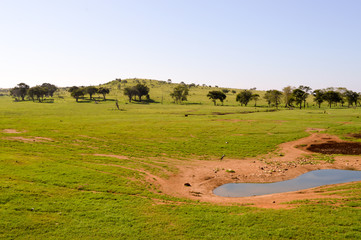 View of the Tsavo East savannah