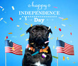 Black pug with an American flag on the fourth of July