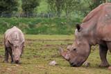 Mummy and Baby Rhino