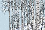 birch grove in the winter - 161279592
