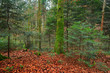 Scenic autumn pine forest with fallen brown leaves