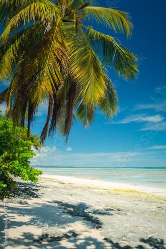 Papiers peints Tropical plage Mare