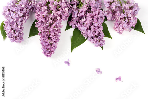 lilac flower isolated on white background. top view