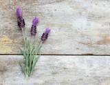 Spanish lavender flowers on a wood background with copy space