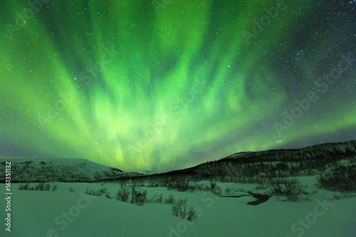 Northern lights above trees in a winter landscape.
