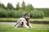 cat and dog friendship