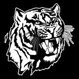 Isolated illustration of a tiger's head