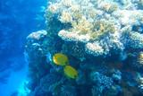 Multicolored fish swim over the coral reef.