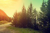 Mountain landscape, fir trees against sunset sky