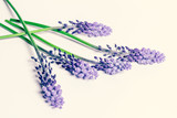 Five violet flower branches