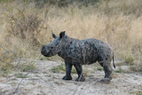 Animals in Djuma Sabi Sands South Africa
