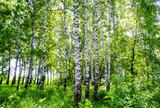 birch grove - 161524705